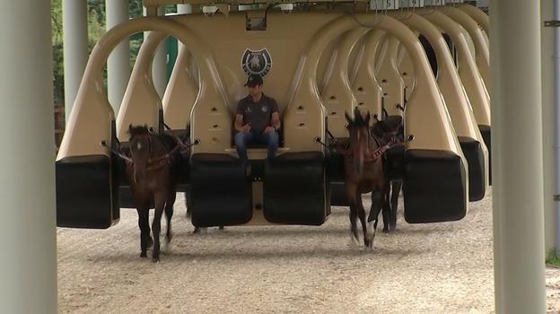 racehorses10