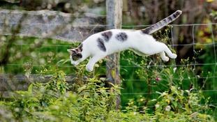 Animal airgun attacks on the rise in Cumbria