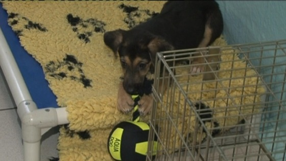 The Dogs Trust has launched their annual campaign against giving dogs as Christmas presents