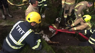 Calf rescued from disused quarry in West Yorkshire