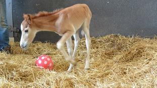Baby foal