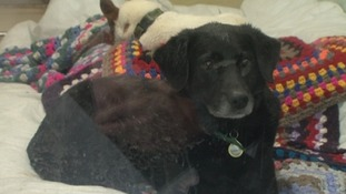 Bubba the Black Labrador cross has been at the centre in Shrewsbury for three weeks