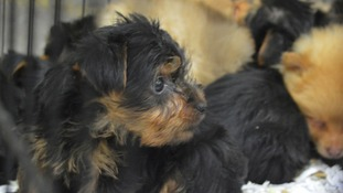 Suspended jail term for man who tried to make 'quick buck' smuggling puppies