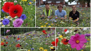 Why Exeter's roundabouts are bursting into bloom