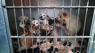 Dogs rescued in Europe