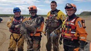 Dog and owner rescued from mud in 'challenging' rescue operation