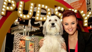 Celebrities pay tribute to BGT star Pudsey the dog