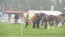Judging at the Penrith Show.
