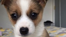 Puppy abandoned in box looking for new home