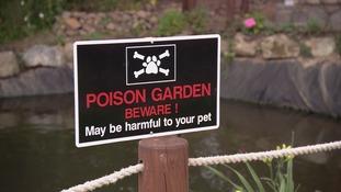 poisonous plant garden