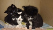 Three kittens dumped in a box and left on a London bus