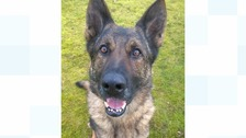 PD Blue has received a PDSA commendation.