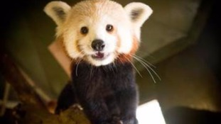 Meet Mali, the newest recruit at Woburn Safari Park.