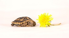Finn the tiny tortoise is an instant internet hit
