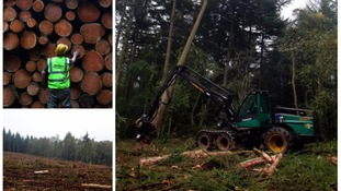 'Ambition needed' for Welsh forestry