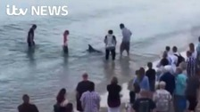 Dolphin in distress rescued by local people on beach
