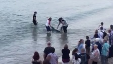 Dolphin being guided away from shore