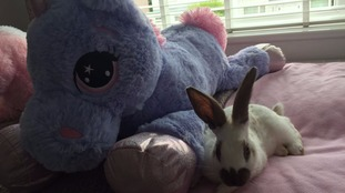 Eddie loves cuddling up with his favourite unicorn teddy