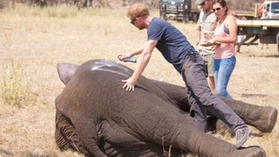 Prince Harry helped implement the first part of the 500 Elephants project last October.