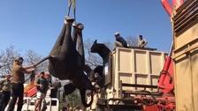 Remarkable uplifting effort to help Africa's elephants