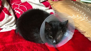 Cat survives after being shot in the head
