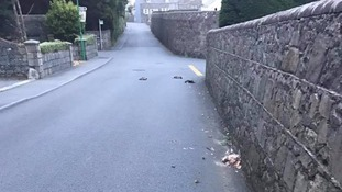 Five ducks were killed on Les Tracheries Road.