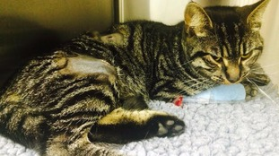 Appeal after one-year-old cat shot twice with airgun