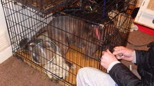 The dogs were left in the crates without food and water