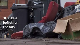 'It's like a buffet for the rats': Birmingham's maggot-ridden bins uncollected for five weeks