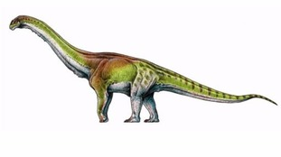 Artists impression of the Patagotitan mayorum