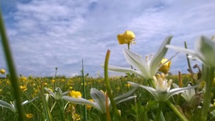 Sunny spells over a field of buttercups