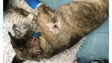 The Border terrier cross, named Sam, was targeted in the Sanderson Close area of the city