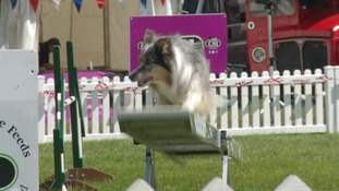 There are 18 rings and 200 competition classes at the dog agility event.