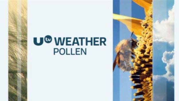P_pollen_100817