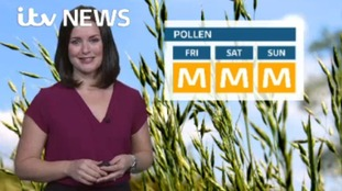 Pollen forecast for the weekend