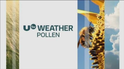 P_pollen__11082017
