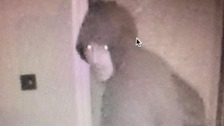 A close up of the thief inside the house, captured on CCTV