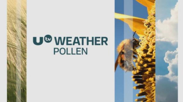 P_pollen_13082017