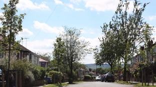 Around 1/6 of Sheffield's trees are set to be replaced by the end of 2017