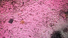 Mysterious pink substance found across our coastline