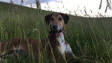 Happy ending for abandoned Lurcher