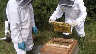 Rare bee being reintroduced at Essex reservoir