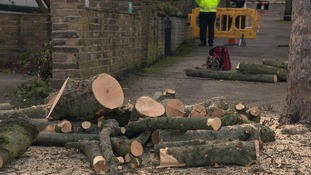 The council say trees earmarked for felling are dying or diseased, or pose dangers.