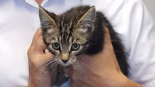 Kitten named Diesel rescued from van engine
