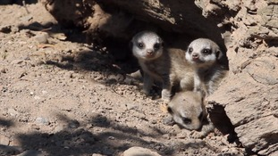 Tiny meerkats are among a number of new arrivals at the park.