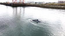 minke whale Belfast
