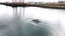 Whale spotted in Belfast Harbour