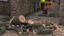 The council say trees earmarked for felling are dying or diseased, or pose dangers
