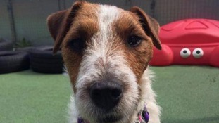 The RSPCA say they will start looking for Molly's 'forever home' mid-September.