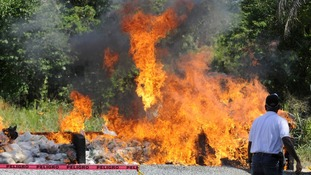 Dominican contraband goes up in smoke